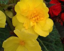 04-3-fleurs-annuelles-560-660